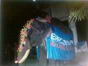 ericsson-elefant-2_redigerad-1
